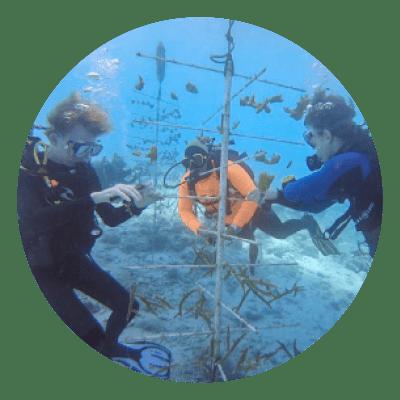 Kulturfag Coral Restoration